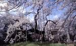 2010.04.11.jpg